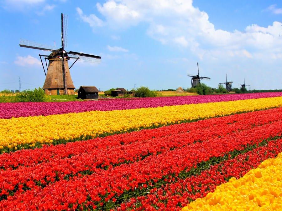 E-commerce en Holanda